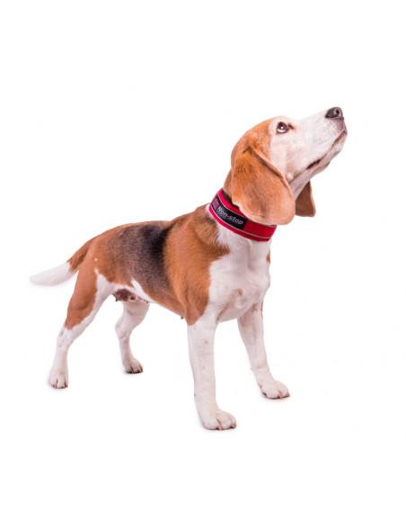 Active halsbånd til hunden