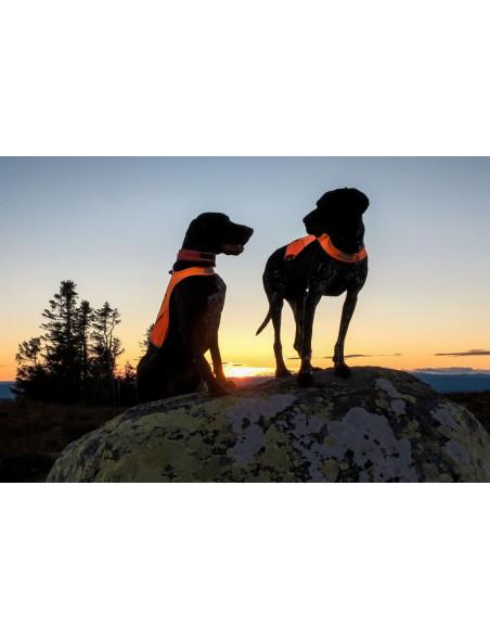 Markeringsdækken til hunde med gode reflekser
