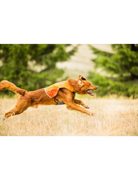 Protector jagtvest til hunden