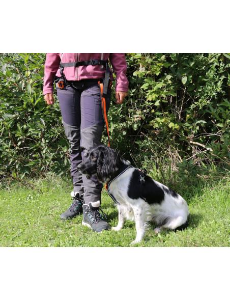 Løbebælte til hund