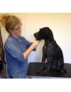 Workshop i praktisk pels- og potepleje på din hund