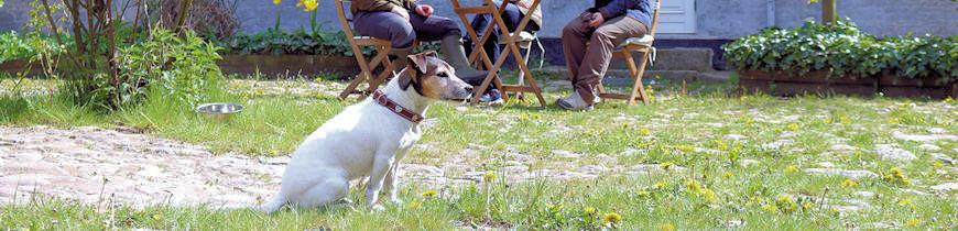 Udstyr til jagthunden og familiehunden i høj kvalitet